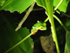 Costa Rica - Le blog de natte